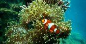 1.-Clown-Fish