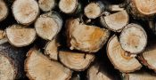 Karakteristik-kayu-meranti-3