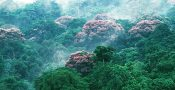 hutan01
